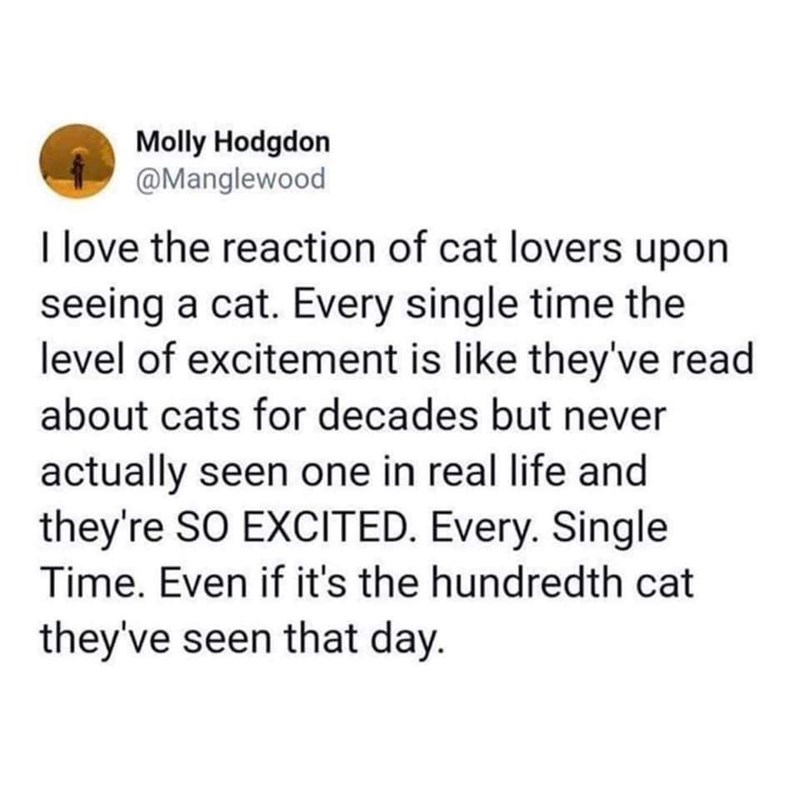 Text - Molly Hodgdon @Manglewood I love the reaction of cat lovers upon seeing a cat. Every single time the level of excitement is like they've read about cats for decades but never actually seen one in real life and they're SO EXCITED. Every. Single Time. Even if it's the hundredth cat they've seen that day.