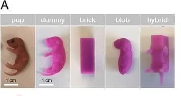 Pink - A pup dummy brick blob hybrid 1 cm 1 cm