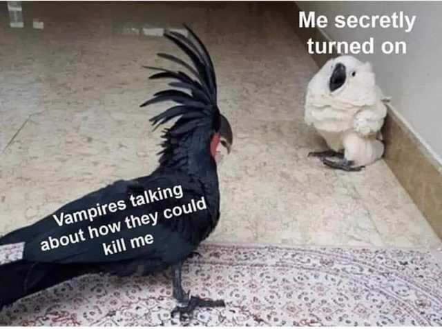 Bird - Me secretly turned on Vampires talking about how they could kill me