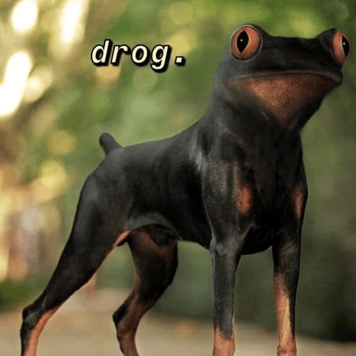 Dog - drog.