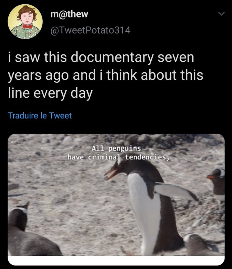Bird - m@thew @TweetPotato314 i saw this documentary seven years ago andi think about this line every day Traduire le Tweet All penguins have criminal tendencies,