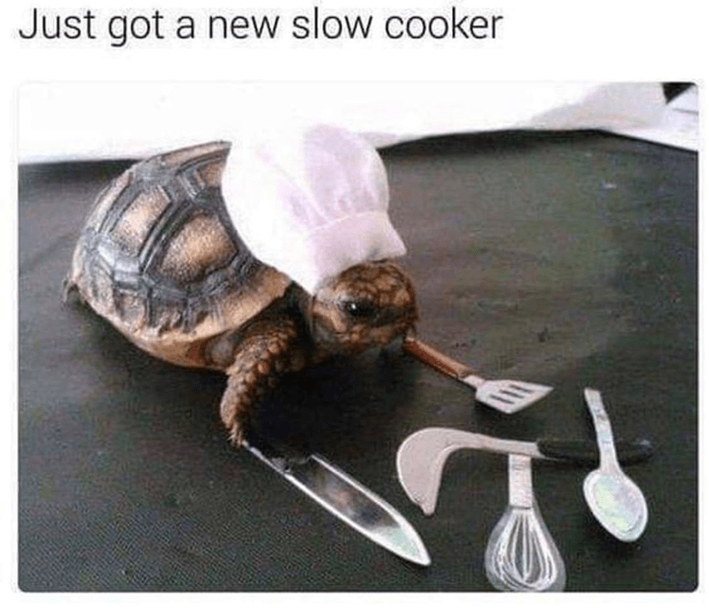 Funny pun meme, slow cooker, turtle in chef hat | Just got a new slow cooker tiny turtle cooking with miniature spatula and knife