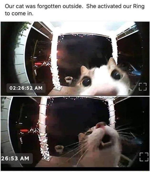 Our cat was forgotten outside. She activated our Ring to come in. 02:26:52 AM fisheye lens camera footage