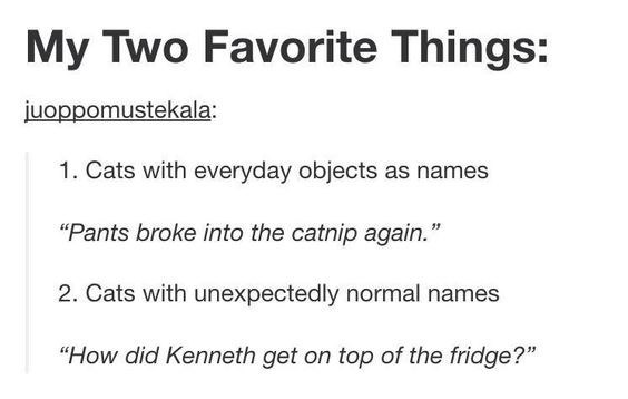 """Text - My Two Favorite Things: juoppomustekala: 1. Cats with everyday objects as names """"Pants broke into the catnip again."""" 2. Cats with unexpectedly normal names """"How did Kenneth get on top of the fridge?"""""""
