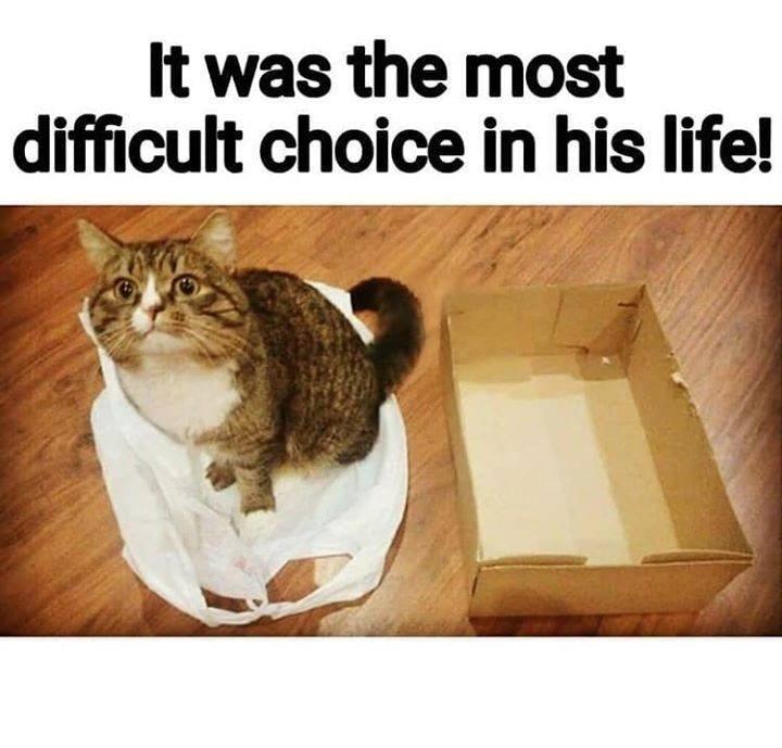 cat memes - 9493207296