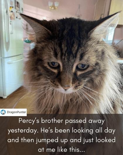 cat memes - 9493209600