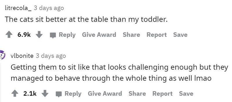 Text - litrecola_ 3 days ago The cats sit better at the table than my toddler. 6.9k Reply Give Award Share Report Save vlbonite 3 days ago Getting them to sit like that looks challenging enough but they managed to behave through the whole thing as well Imao 1 2.1k Reply Give Award Share Report Save
