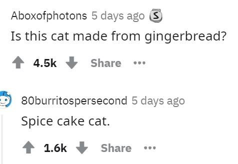 Text - Aboxofphotons 5 days ago 3 Is this cat made from gingerbread? 1 4.5k Share . 80burritospersecond 5 days ago Spice cake cat. 1 1.6k Share