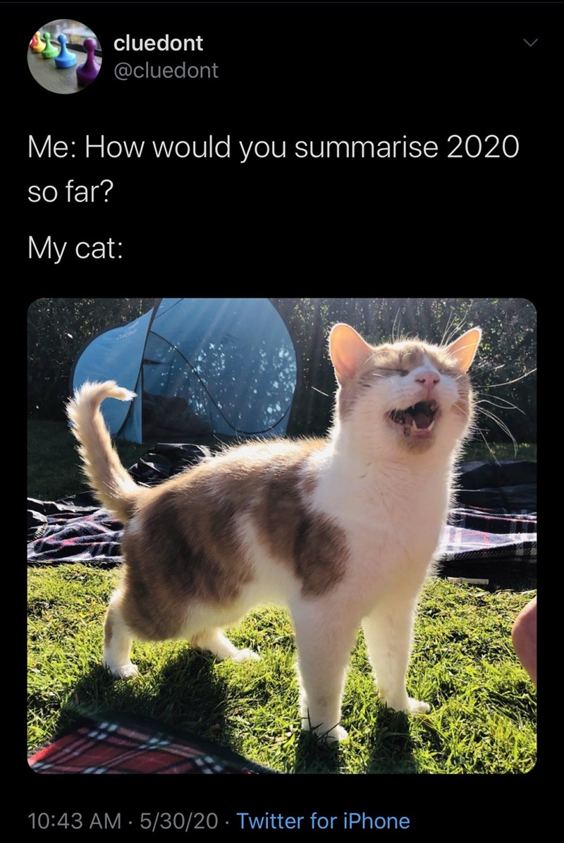 Cat - cluedont @cluedont Me: How would you summarise 2020 so far? Му cat: 10:43 AM · 5/30/20 · Twitter for iPhone