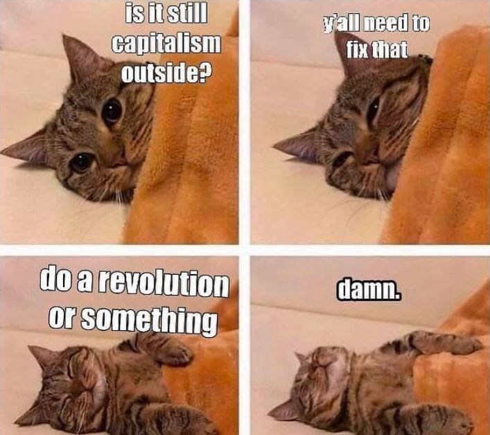 Cat - isit still capitalism outside? Yall need to fix that do a revolution damn. or something