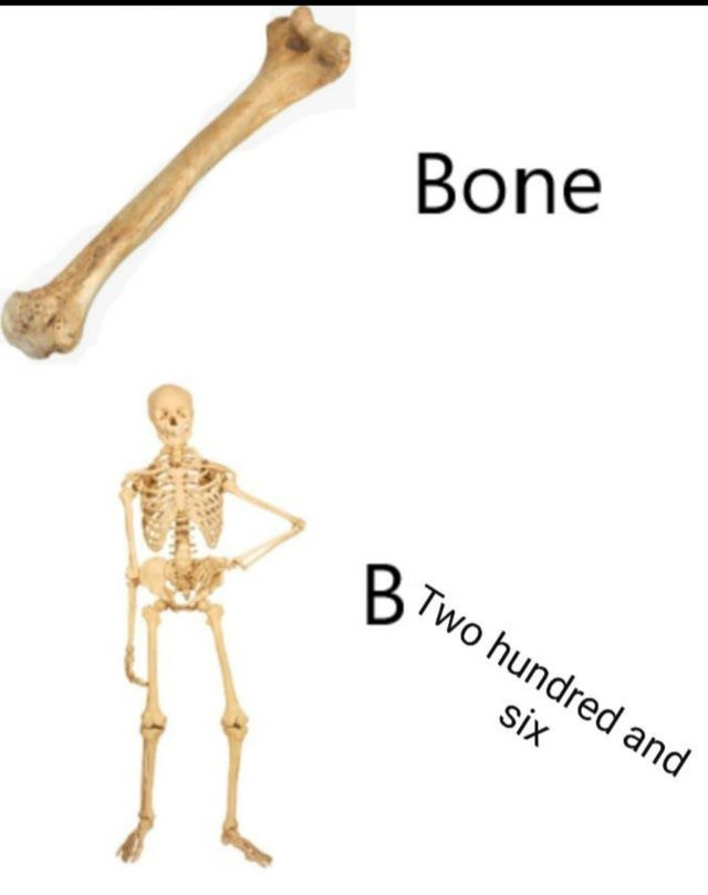 Joint - Bone Two hundred and six
