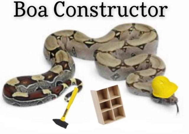 Boa constrictor - Boa Constructor