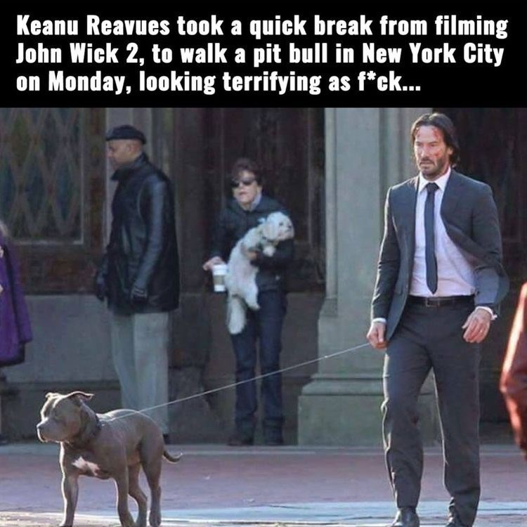 Dog - Keanu Reavues took a quick break from filming John Wick 2, to walk a pit bull in New York City on Monday, looking terrifying as f*ck...