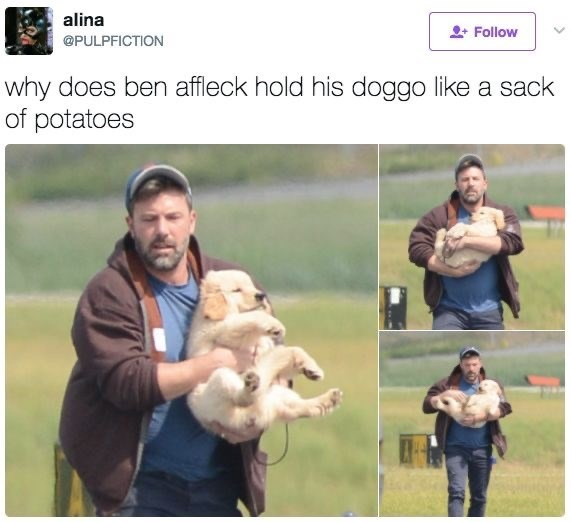 Companion dog - alina Follow @PULPFICTION why does ben affleck hold his doggo like a sack of potatoes