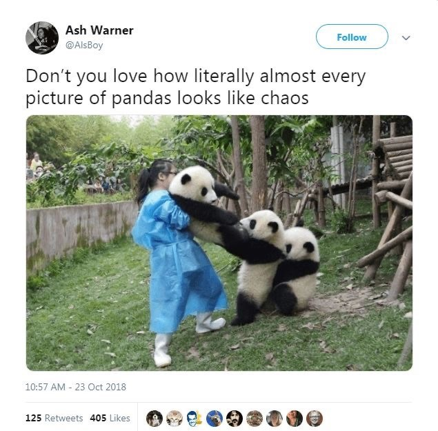 Panda - Ash Warner Follow @AlsBoy Don't you love how literally almost every picture of pandas looks like chaos 10:57 AM - 23 Oct 2018 125 Retweets 405 Likes