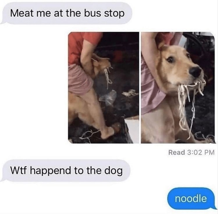 Canidae - Meat me at the bus stop Read 3:02 PM Wtf happend to the dog noodle