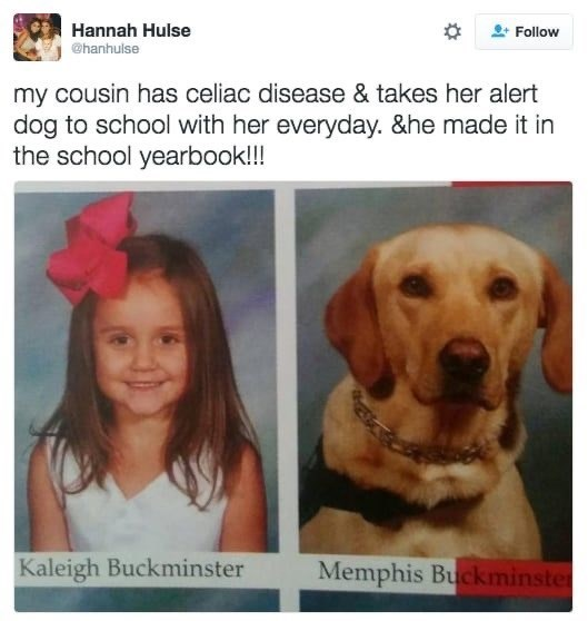 Dog breed - Hannah Hulse Follow @hanhulse my cousin has celiac disease & takes her alert dog to school with her everyday. &he made it in the school yearbook!!! Kaleigh Buckminster Memphis Buckminster