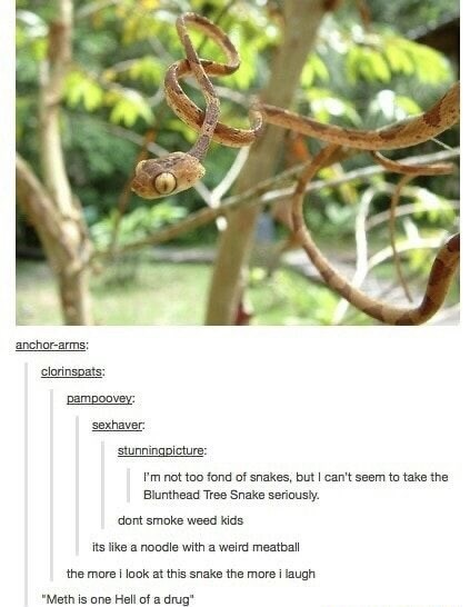 "Plant - anchor-arms: clorinspats: pampoovey: sexhaver. stunningpicture: I'm not too fond of snakes, but I can't seem to take the Blunthead Tree Snake seriously. dont smoke weed kids its like a noodle with a weird meatball the more i look at this snake the more i laugh ""Meth is one Hell of a drug"""
