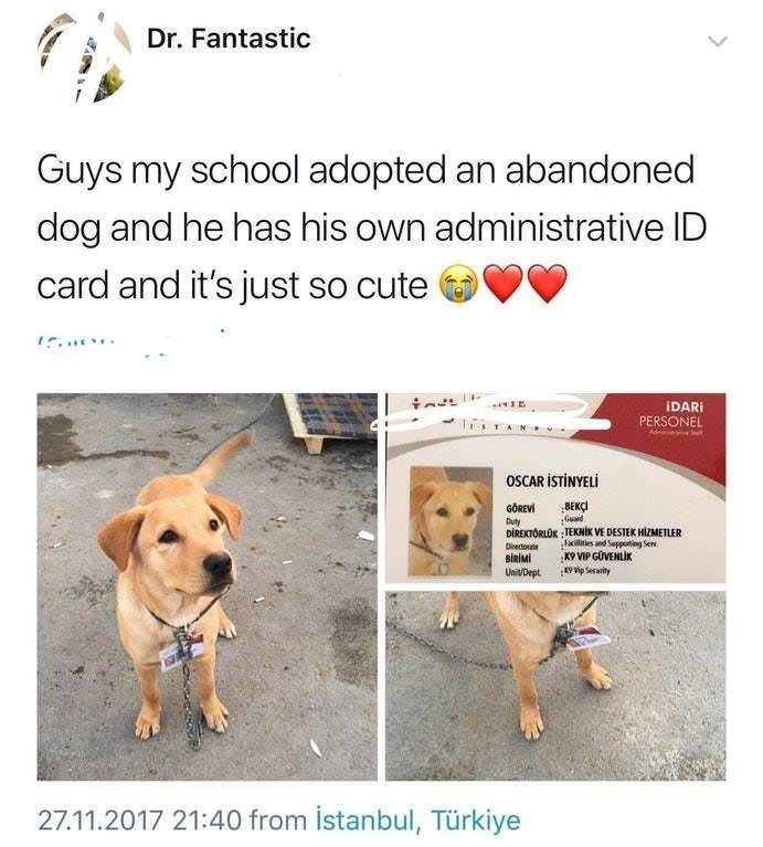 Dog breed - Dr. Fantastic Guys my school adopted an abandoned dog and he has his own administrative ID card and it's just so cute IDARI PERSONEL TAN OSCAR İSTİNYELİ BEKÇİ Guand DİREKTÖRLÜK : TEKNİK VE DESTEK HİZMETLER iles and Suppoting Sen. K9 VIP GOVENLİK GÖREVİ Duty Diectorete BİRİMİ UnivDept. vip Serwity 27.11.2017 21:40 from İstanbul, Türkiye