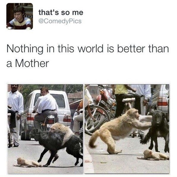 Adaptation - that's so me @ComedyPics Nothing in this world is better than a Mother
