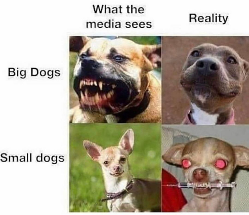 Funny meme about how people think pit bulls are vicious but little dogs are actually more vicious | What the media sees Big Dogs Small dogs Reality