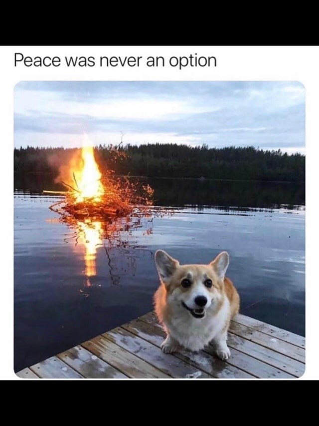 Dog - Peace was never an option