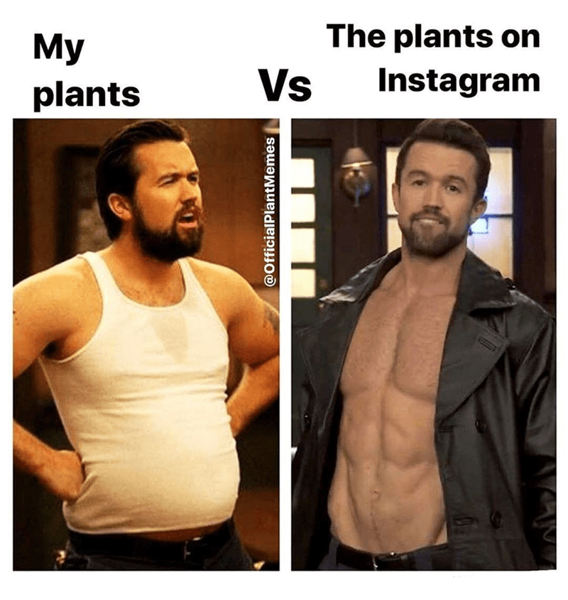 Hair - The plants on My plants Vs Instagram @OfficialPlantMemes