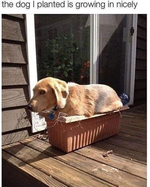 Dog - the dog I planted is growing in nicely