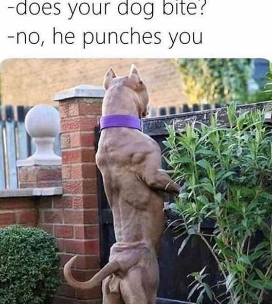 Canidae - -does your dog bite? -no, he punches you