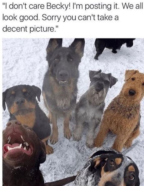 """Dog - """"I don't care Becky! I'm posting it. We all look good. Sorry you can't take a decent picture."""""""