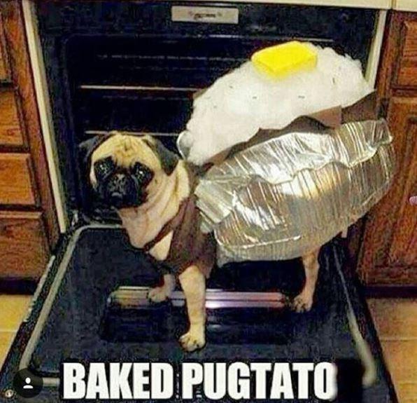 Pug - BAKED PUGTATO