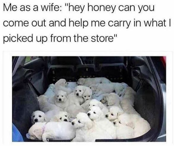"""Dog breed - Me as a wife: """"hey honey can you come out and help me carry in what I picked up from the store"""""""