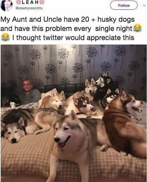 Vertebrate - LEAH Follow @xleahprescottx My Aunt and Uncle have 20 + husky dogs and have this problem every single night e I thought twitter would appreciate this