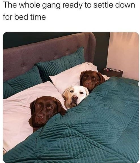 Dog - The whole gang ready to settle down for bed time