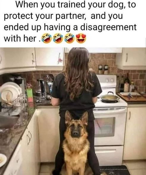 Dog - When you trained your dog, to protect your partner, and you ended up having a disagreement with her
