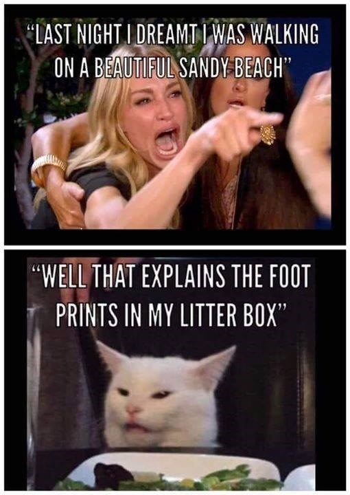 "woman yelling at a cat meme 'LAST NIGHT I DREAMT I WAS WALKING ON A BEAUTIFUL SANDY BEACH' ""Well that explains THE FOOT PRINTS IN MY LITTER BOX"""