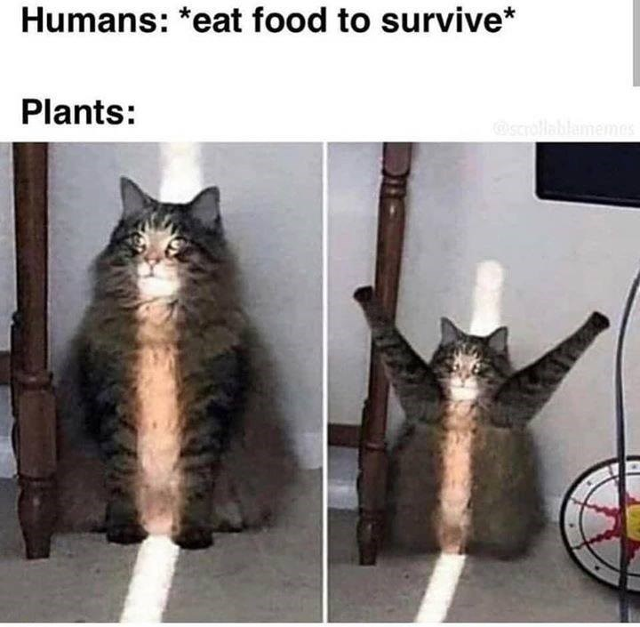 Humans: *eat food to survive* Plants: cat sitting in a strip of sunlight