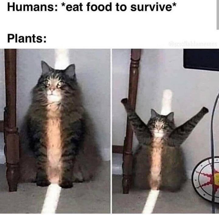 cat memes - 9493827840