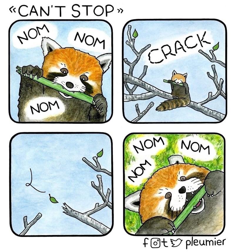 Red panda - «CAN'T STOP » NOM NOM CRACK NOM NOM NOM NOM fot& pleumier