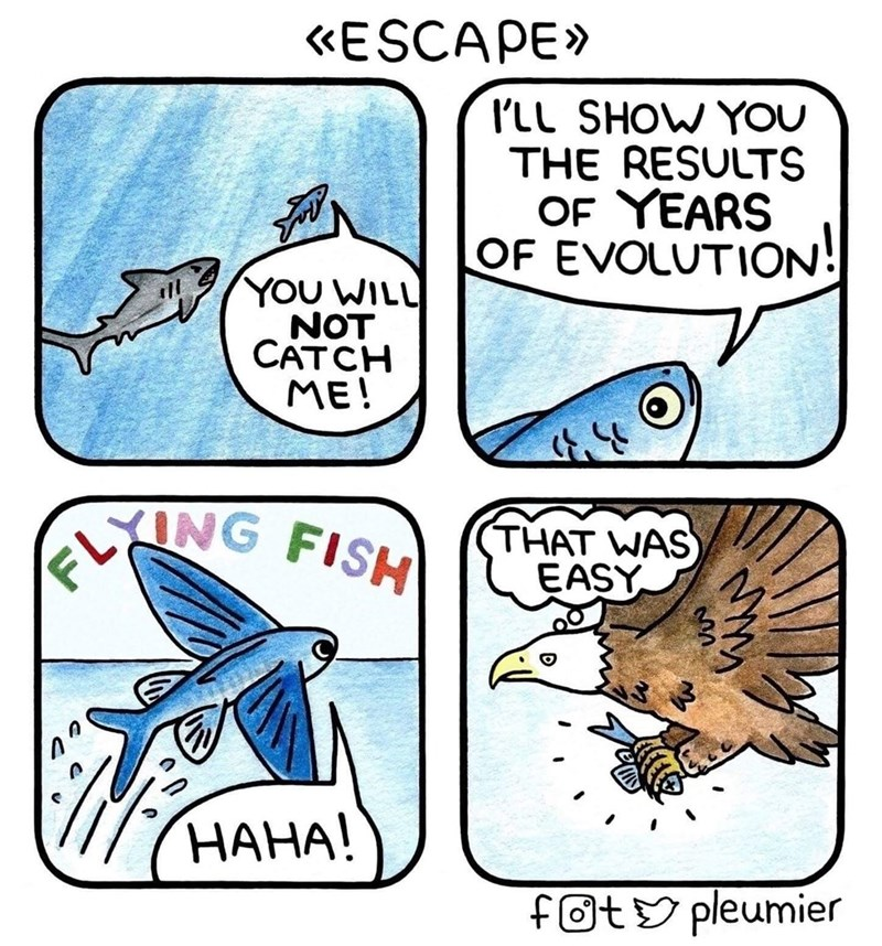 Cartoon - «ESCAPE» I'LL SHOW YOU THE RESULTS OF YEARS OF EVOLUTION! YOU WILL NOT CATCH ME! ELNG FISH THAT WAS EASY НАНА! fotY pleumier
