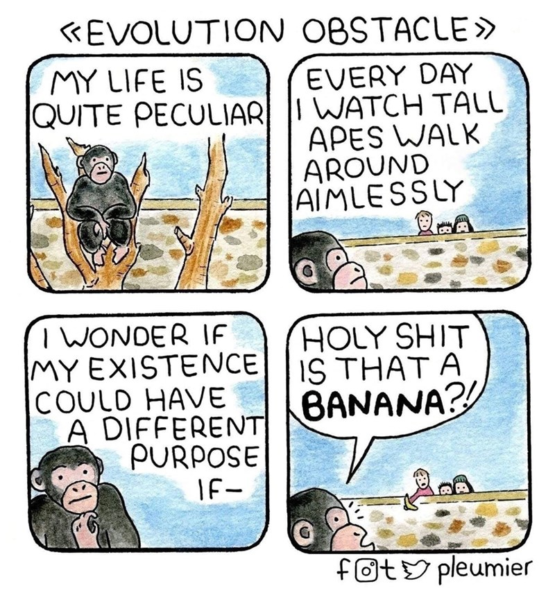 Cartoon - «EVOLUTION OBSTACLE» MY LIFE IS EVERY DAY QUITE PECULIAR I WATCH TALL APES WALK AROUND AIMLESSLY T WONDER IF MY EXISTENCE COULD HAVE A DIFFERENT PURPOSE HOLY SHIT IS THAT A BANANA?! IF- foty pleumier