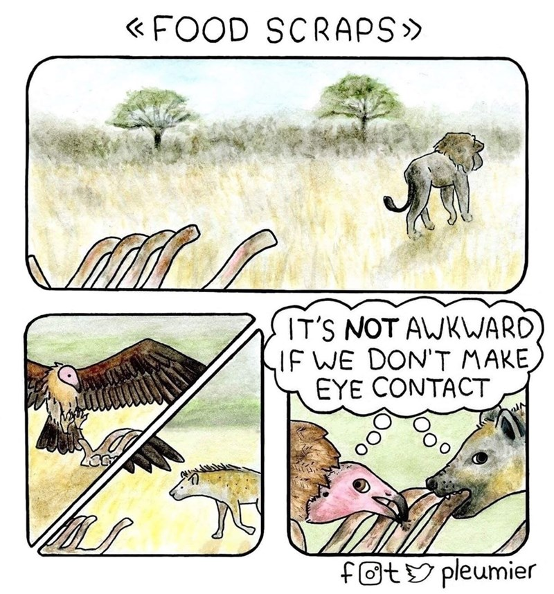 Wildlife - « FOOD SCRAPS» IT'S NOT AWKWARD IF WE DON'T MAKE EYE CONTACT fOtY pleumier