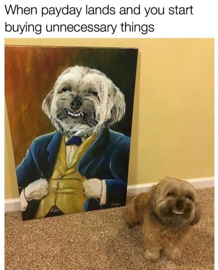 Dog - When payday lands and you start buying unnecessary things