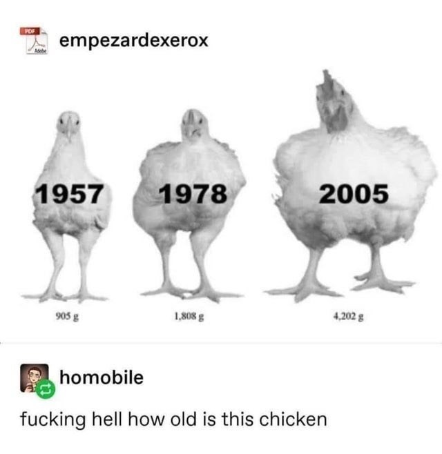 Chicken - POF empezardexerox Adebe 1957 1978 2005 905 g 1,808 g 4,202 g homobile fucking hell how old is this chicken