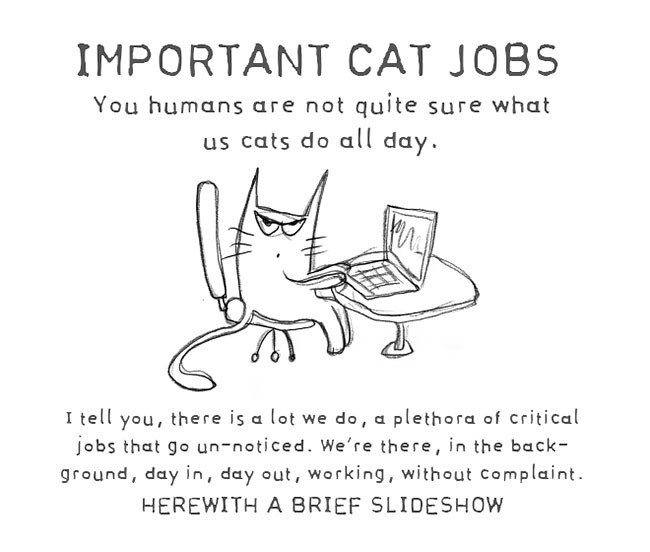 Text - IMPORTANT CAT JOBS You humans are not quite sure what us cats do all day. I tell you, there is a lot we do, a plethora of critical jobs that go un-noticed. We're there, in the back- ground, day in, day out, working, without complaint. HEREWITH A BRIEF SLIDESHOW