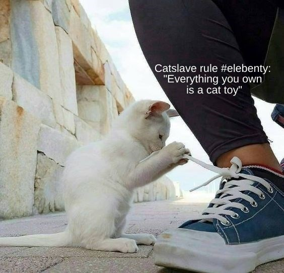 "Cat - Catslave rule #elebenty: ""Everything you own is a cat toy"""