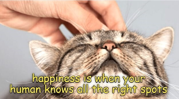 Cat - happiness is when your human knows all the right spots