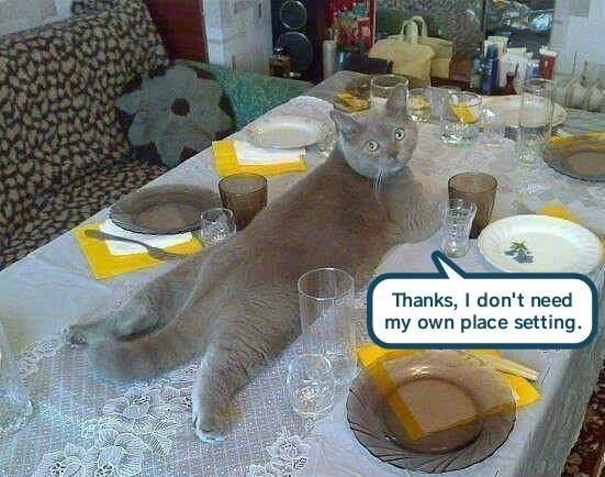 Meal - Thanks, I don't need my own place setting.