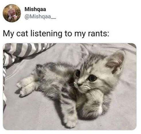 Cat - Mishqaa @Mishqaa_ My cat listening to my rants: