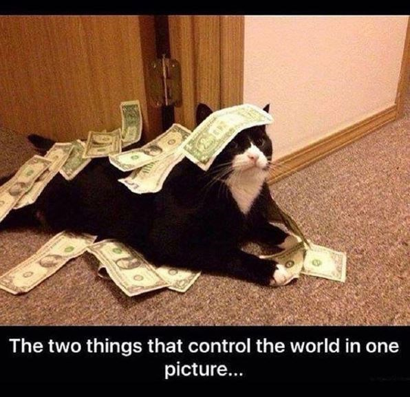 Cat - The two things that control the world in one picture...